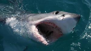 鯊魚新發現 Sharkville