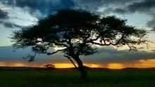 動物大遷徙 The Real Serengeti 節目