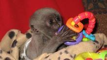 Opičí život pořad