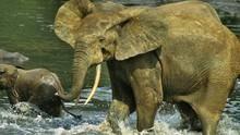 加彭: 生態樂園 Gabon: Triumph Of The Wild 節目