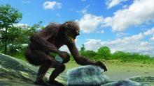Savaşçı Şempanzeler SAYFAYA GİT