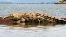 超級巨鱷 Monster Crocs 節目