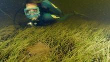 Jean-Michel Cousteau - Abenteuer Ozean Programm