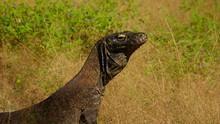 Drachen und Reptilien Programm