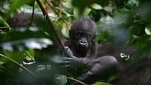Záhadná gorila pořad