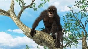 Csimpánz: az ember múlt időben?