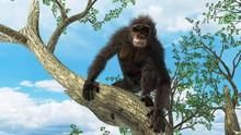 Csimpánz: az ember múlt időben? film
