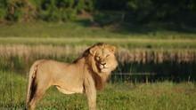 Harc a vadászmezőkért film
