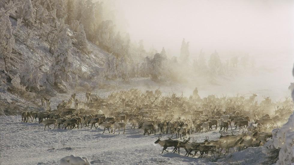 Kinn az orosz vadonban