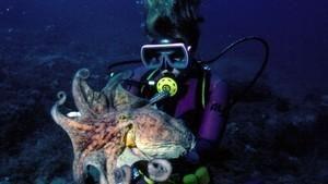 Pátrání po chobotnici velké