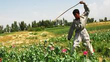 Inside: Afghan Heroin show