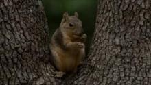 Super Squirrel show