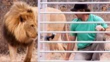 Man vs Lion Voir la fiche programme