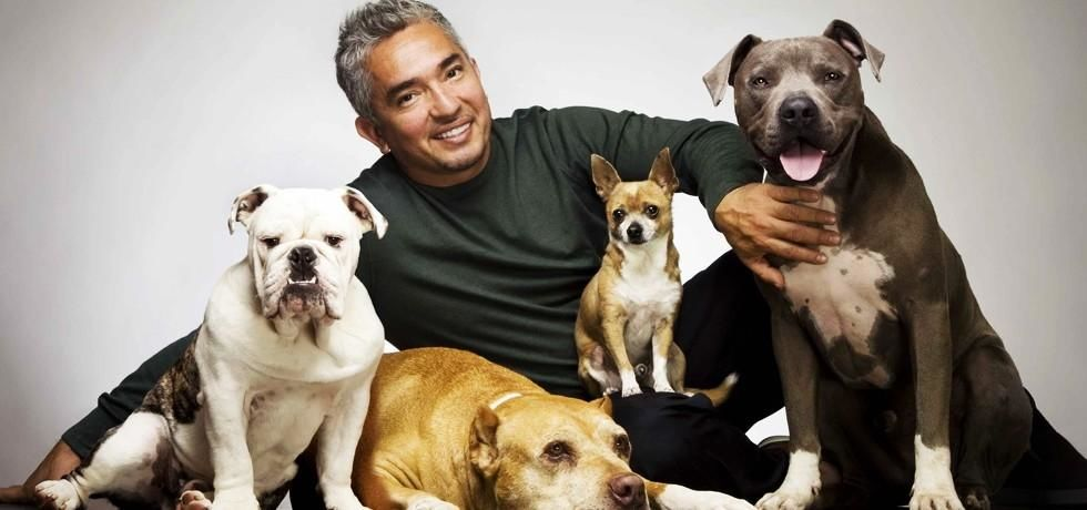 César, l'homme qui parlait aux chiens