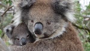 أستراليا البريّة