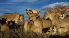 獅幫地帶 節目