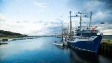 Lupi di mare: l'oro del nord programma