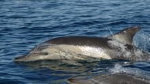 Dolphin Army show