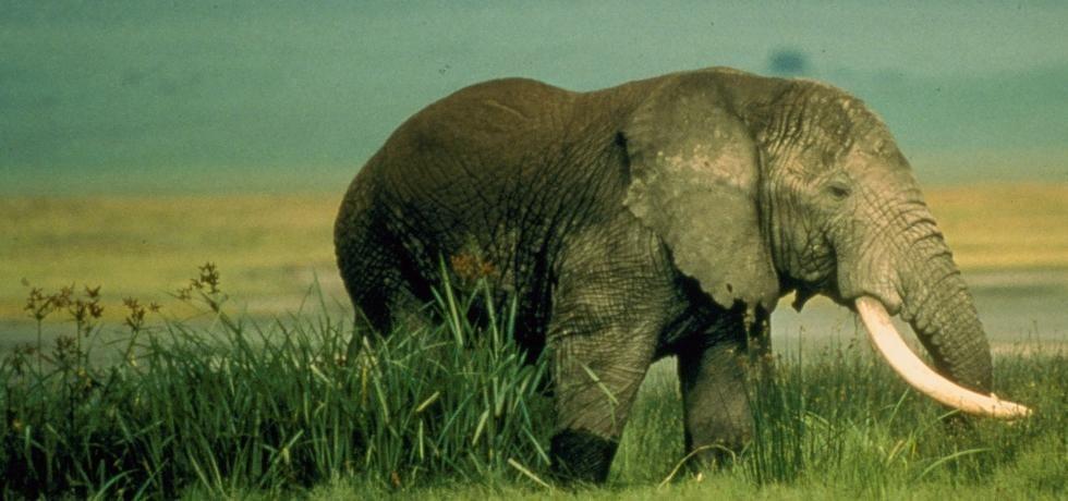 Africa's Deadly Eden