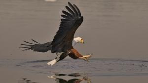 الحياة البرية في النيل