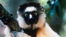 Csodák szigete, Madagaszkár film