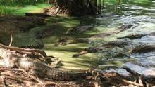 Když krokodýli pojídali dinosaury pořad