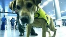 Alerta Aeropuerto: Colombia Serie