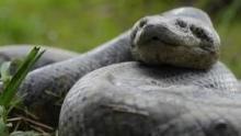 Anaconda : Le tueur de l'ombre Voir la fiche programme