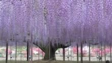 Giappone: natura segreta programma