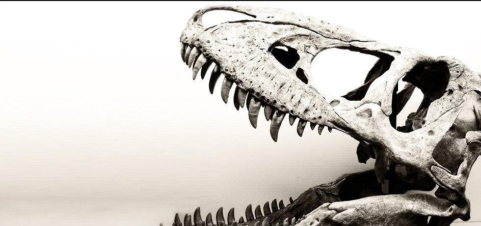 Maior que o T. rex