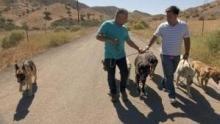Notruf Hund - Einsatz für Cesar Programm