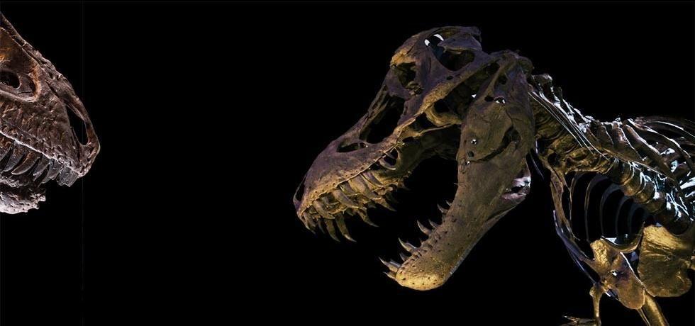 T. rex: O Derradeiro Sobrevivente