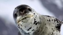 Vad Antarktisz film