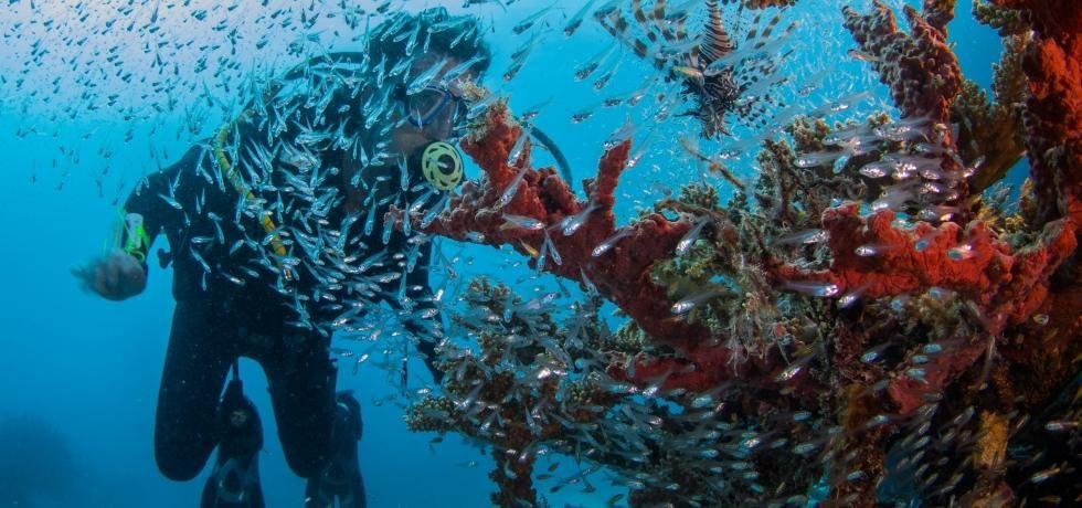 Élet a Nagy-korallzátonyon