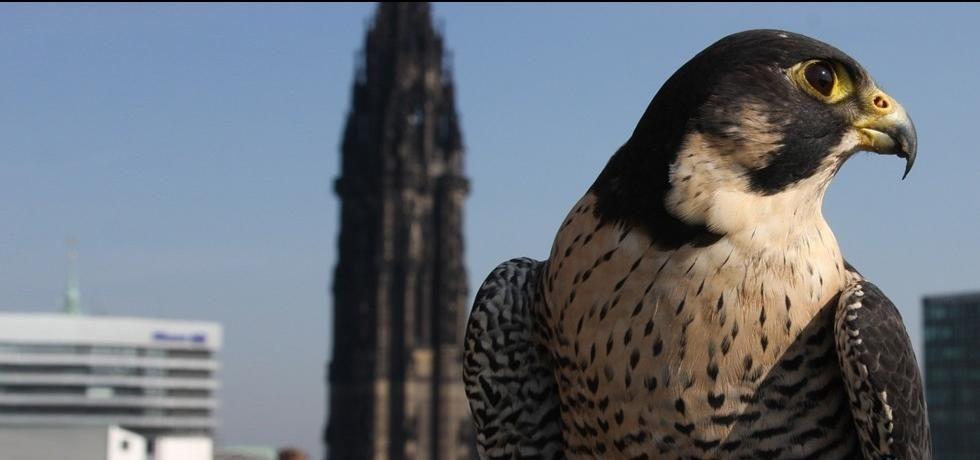 Uccelli: l'arte della violenza