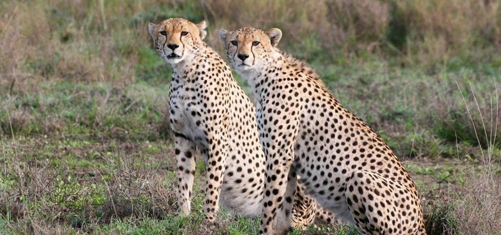 Serengeti: Ärger im Paradies