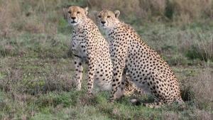 Přežití v Serengeti pořad
