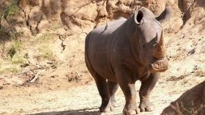 Afrikas farligaste djur