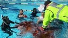 直擊鯊魚攻擊第二季 節目
