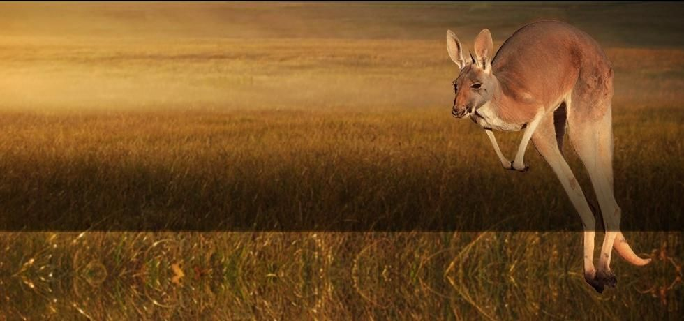 The Kangaroo King