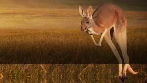 A kengurukirály film