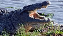 Crocodile Ganglands show