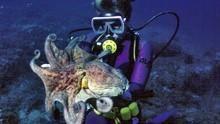 尋找大章魚 Search For The Giant Octopus 節目