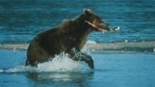 A tízezer medve földje film