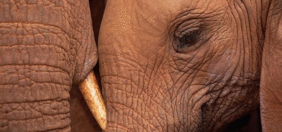 Ratnici za slonovaču