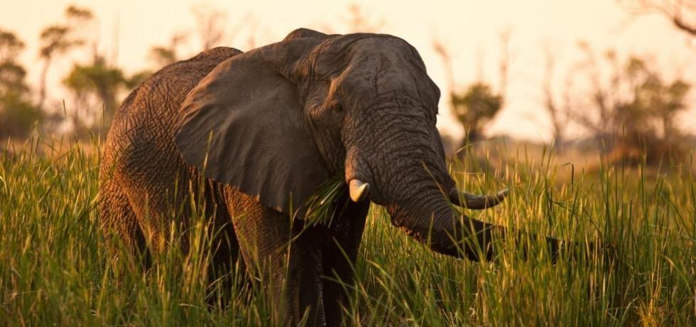 Mensah, reine éléphante