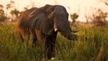 Mensah, reine éléphante Voir la fiche programme