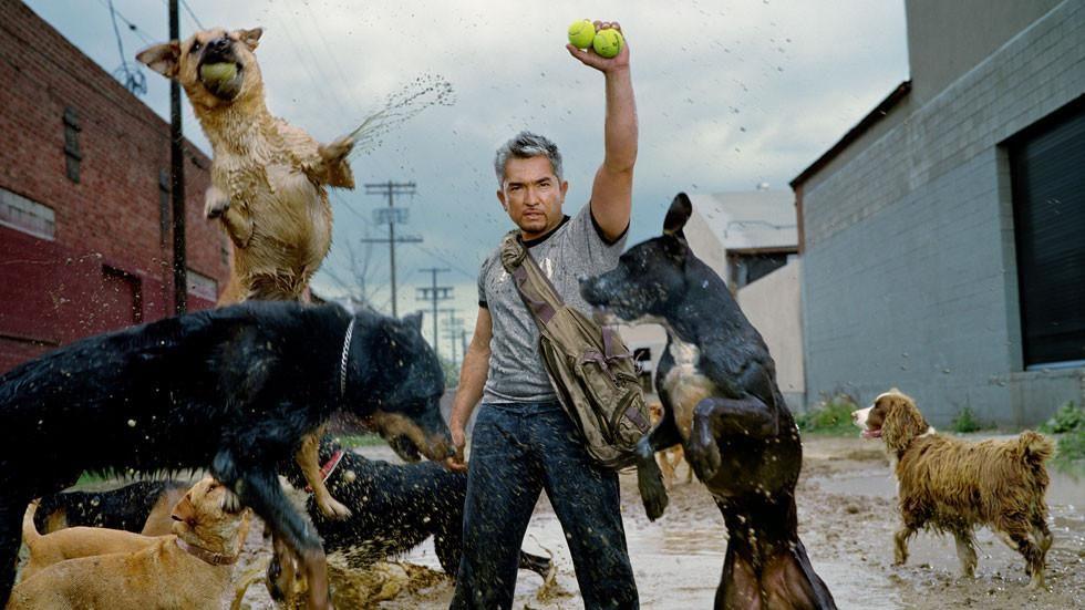 Köpeklere Fısıldayan Adam
