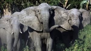 Gorongosa: El reino salvaje de África