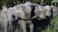 Znovuzrození africké divočiny pořad